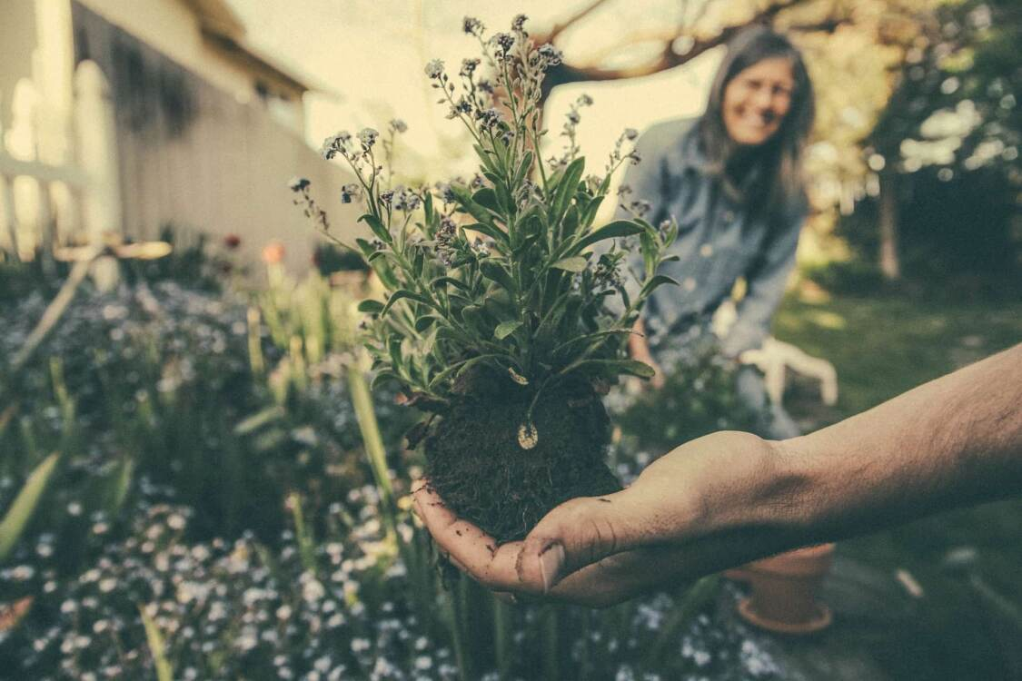 Hand holding an unpotted plant in nursery   Greenhouse web design